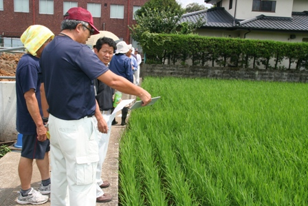 JA営農指導員から今後の管理について話をきく生産者ら(7月31日、熊本市北区龍田地区で)