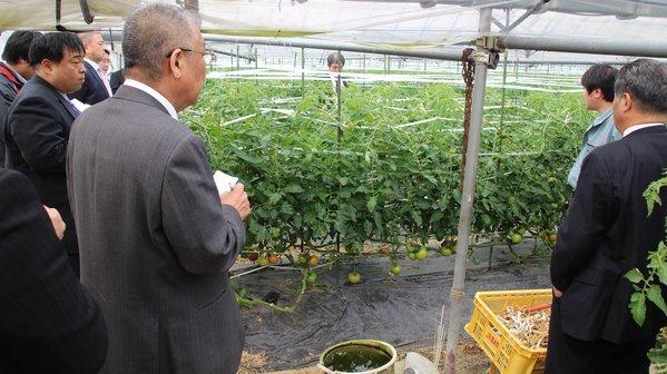 JA営農指導員から生産状況について説明を受ける市場関係者ら
