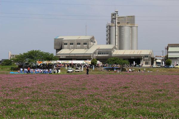 秋津カントリーの前に広がるレンゲ畑
