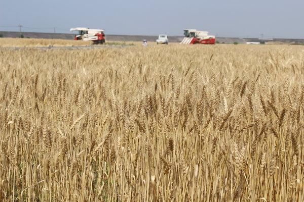好天のもと順調に収穫作業が行われました