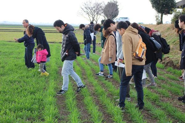 生産者の圃場で麦踏みを行う参加者ら
