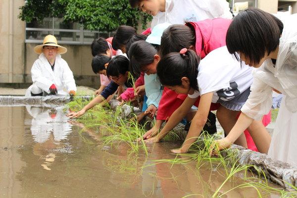 営農指導員の指示で手植えする児童たち