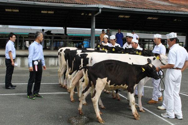 家畜の体積や品位などを厳正に審査