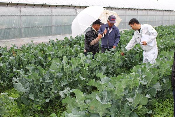 営農指導員と生育について確認する生産者