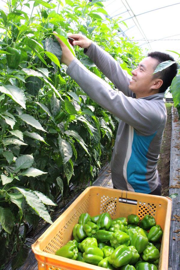 収穫作業を順調に進める生産者