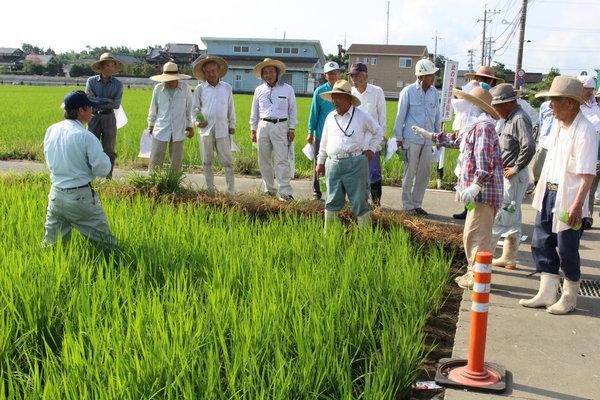 肥培・水管理、適期防除について確認する生産者