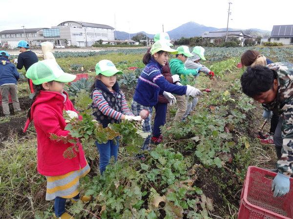 朝から野菜を収穫!