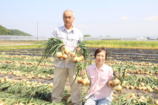甘く高品質な早生タマネギ(岩崎部会長ご夫妻)