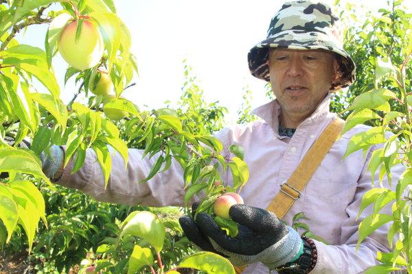 順調に収穫を進める中川部会長