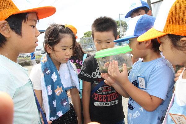 カエルやアメンボ、田んぼの生き物に興味津々