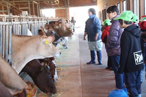 牛さんがたくさん並んでご飯を食べていました