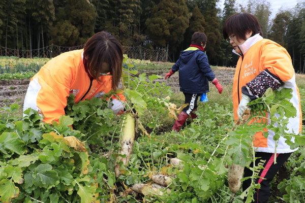 子ども支援用野菜を収穫する女性部員と職員