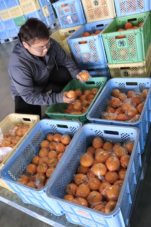 集荷作業を行う選果場職員